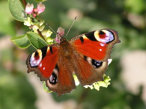 Alternatívne vyučovanie prírodovedy - Hmyz