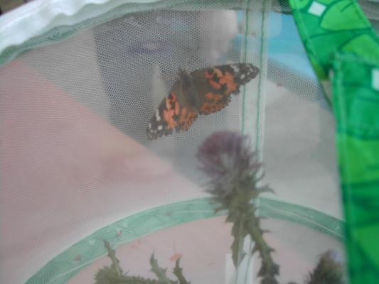 Motýlie farmy