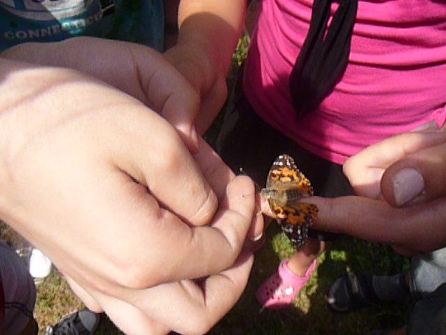 Aj v triede sa môžu vyliahnuť motýle...