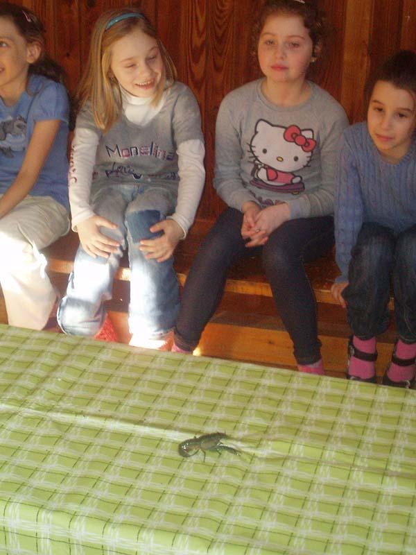 Environmentálna výchova v školskom klube
