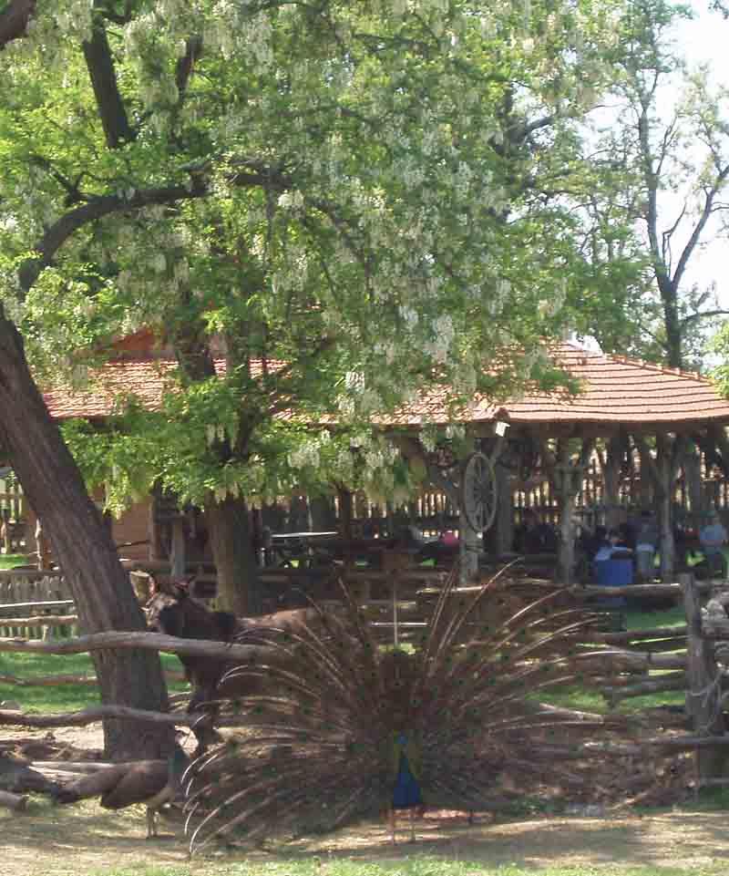 Školský výlet farma Humanita
