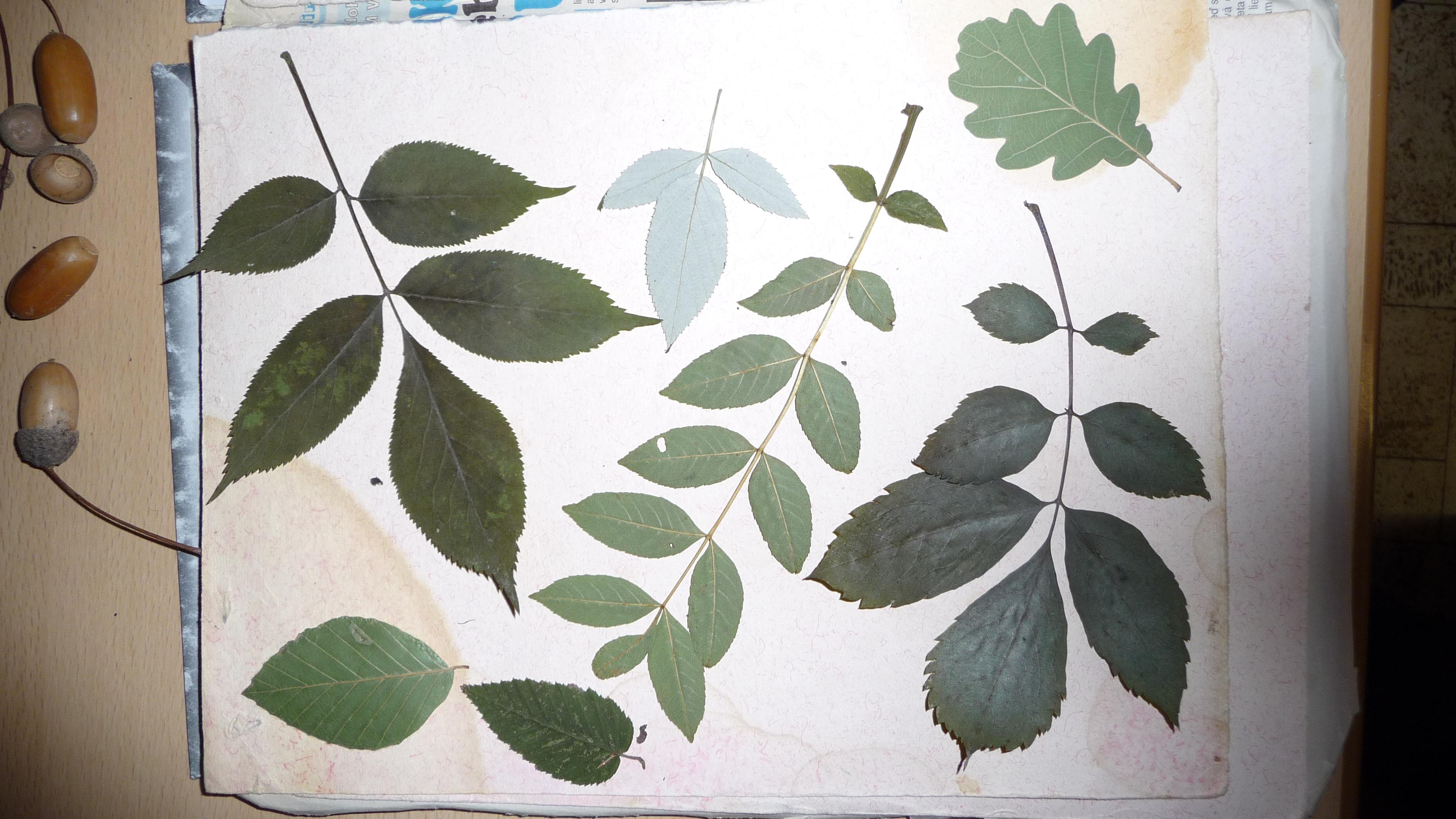 Biologická olympiáda - farebný les