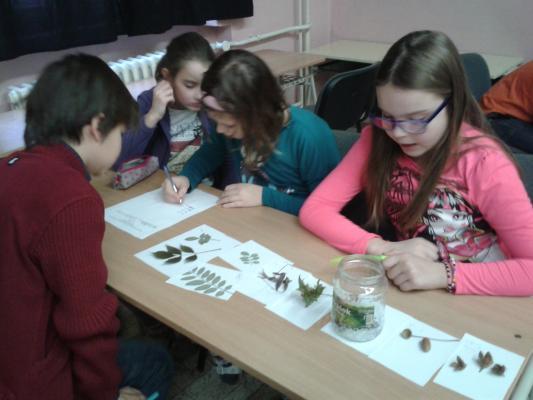 Školské kolo biologickej olympiády - 3. Zelený les